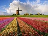 Фестивали и выставки цветов